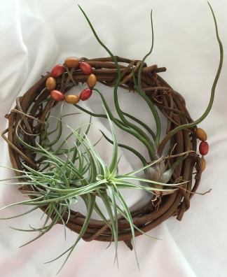 airplant02